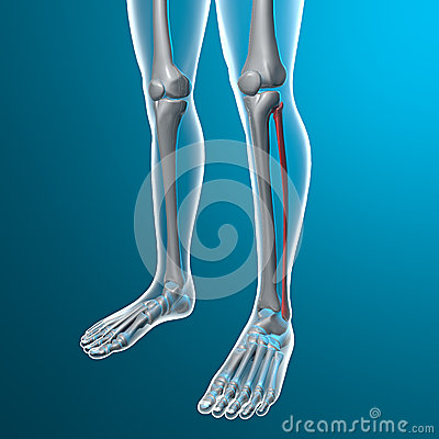Radiografía de piernas humanas, hueso fibular