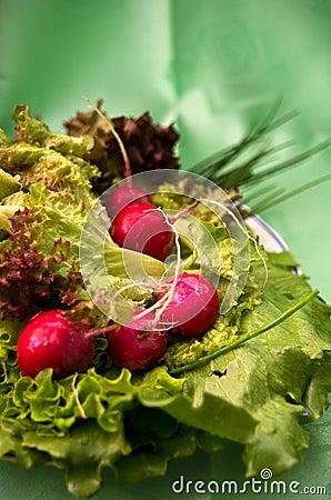 Radish and salad