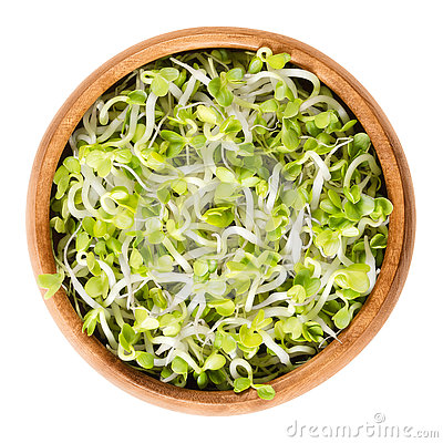 Free Radish Sprouts In Wooden Bowl Over White Royalty Free Stock Photo - 81835855