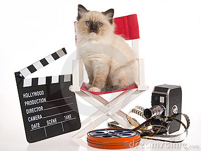 Ragdoll kitten on director chair with movie props