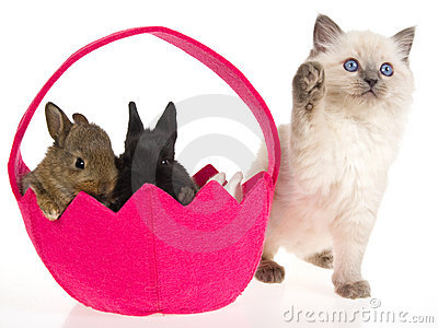 bunnies and kittens. kitten with Easter unnies