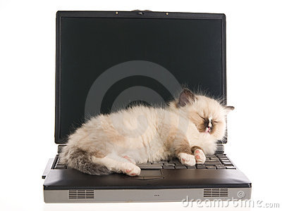 Ragdoll kitten sleeping on laptop on white bg