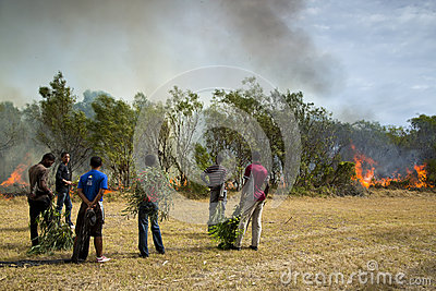 Raging wildfire in Port Elizabeth, South Africa Editorial Stock Image