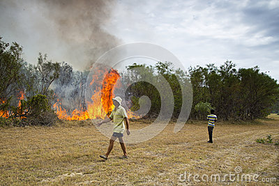 Raging wildfire in Port Elizabeth, South Africa Editorial Photography