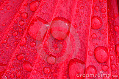 Raid Droplets on Red Flower