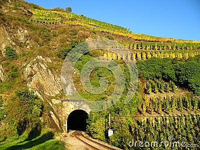 Railroad tunnel in a wine yard