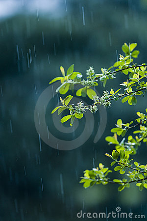 Free Rain Stock Photos - 11415753