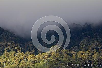 Rain clouds over cloud forest, Ecuador