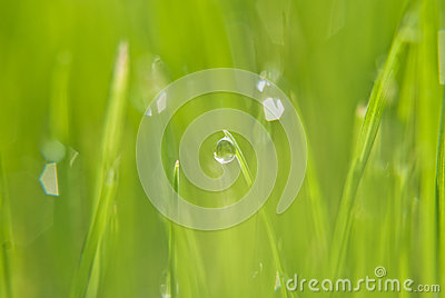 The rain drop on the green grass