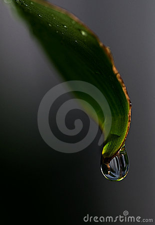 Rain Drop on a Leaf