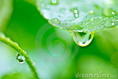 Rain drop on plant leaf