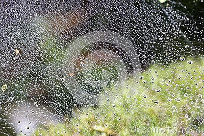Rain drop in the spider web
