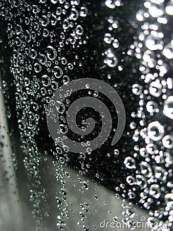 Free Rain Drops Royalty Free Stock Photo - 1249545