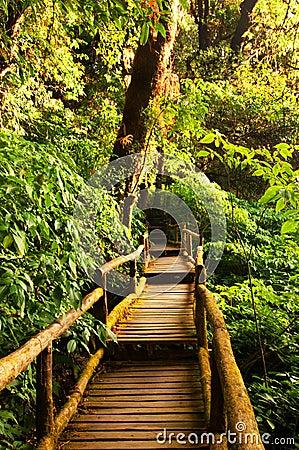 Free Rain Forest Stock Photos - 25076143