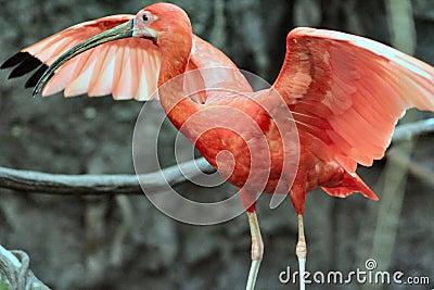 Rain Forest Bird