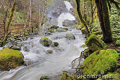 Rain forest and cascade