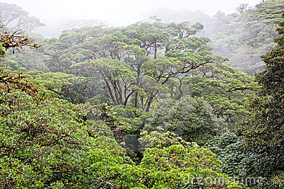 Rain Forest, Costa Rica