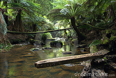 Rain forest creek