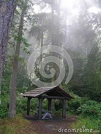Rain Forest Gazebo