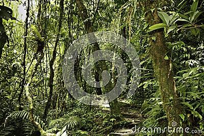Rain forest green tropical amazon primary jungle