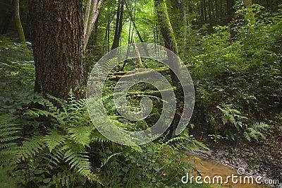 Rain forest jungle