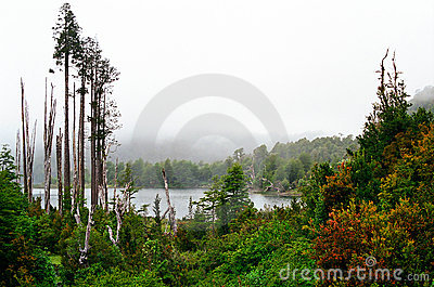 Rain Forest and lake, Chile