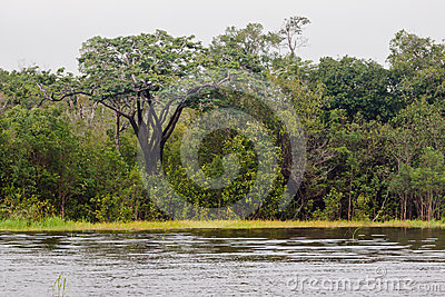 Rain Forest Manaus