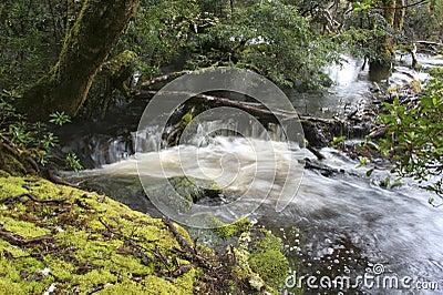 Rain forest waterfall, Tasmania, Australia