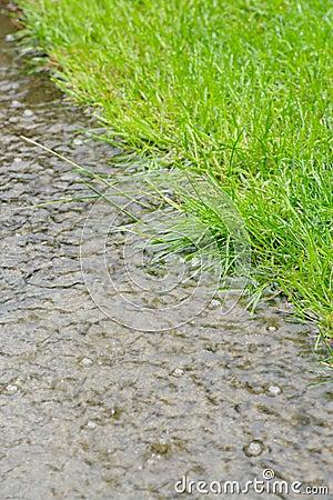Rain and grass