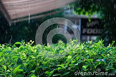 Rain outdoor