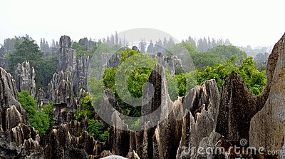 Rain, the Stone Forest