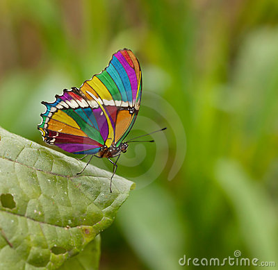 Free Rainbow Butterfly Stock Photography - 20599662