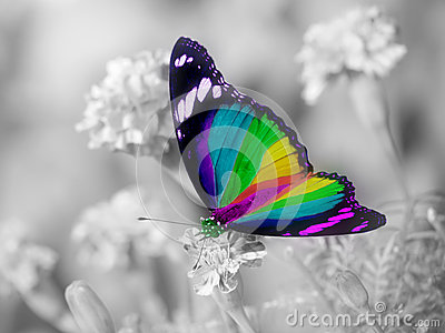 Rainbow butterfly colorful wings Stock Photo