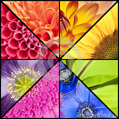 Free Rainbow Collage Of Flowers In Square Frame Stock Photography - 49166512