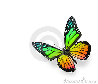 Rainbow Color Butterfly