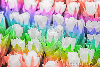 Rainbow color tulip