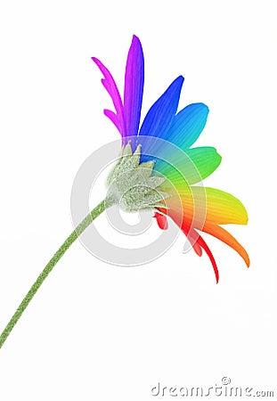 Free Rainbow Flower Royalty Free Stock Image - 25388096