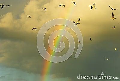 Rainbow and flying birds