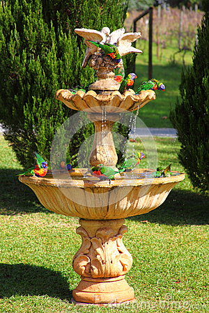Free Rainbow Lorikeet Birds In Water Fountain Royalty Free Stock Images - 31077429