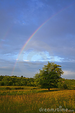 Rainbow over tree in Auvergne landscape