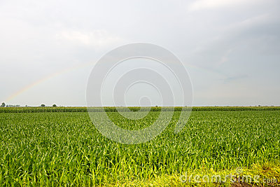 Rainbow over Vercelli countryside