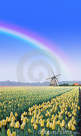 Rainbow over the Windmill at the Tulip Bulb Farm
