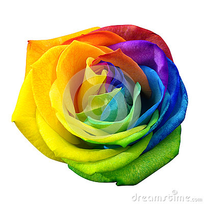 Free Rainbow Rose Or Happy Flower Isolated By Clipping Path Stock Photography - 60241372