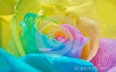 Rainbow rose petals stock photo image 44924279 for Multi colored rose petals