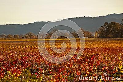 Rainbow Valley Vines