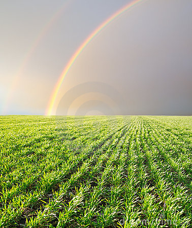 Rainbows over field