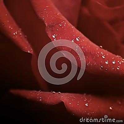 Raindrip Rose in detail