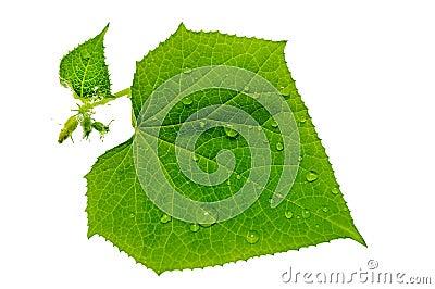 Raindrop on green leaves.