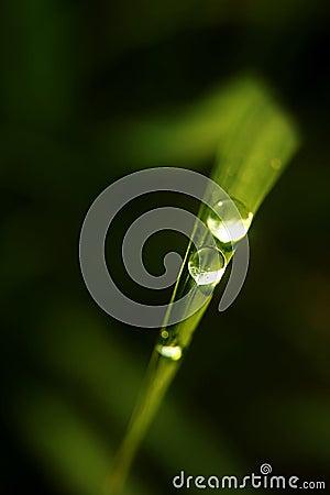 Raindrop On The Leaf