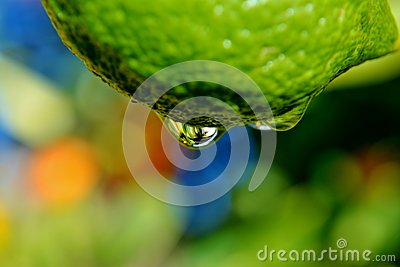 Raindrop on lemon